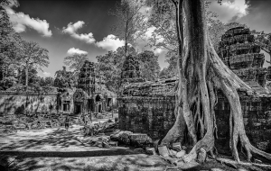 Contemporary Photography - The Jungle Temple